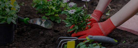 retail-garden-banner-1-1-opt